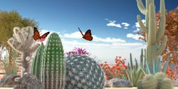 CactusDesert04Web.jpg