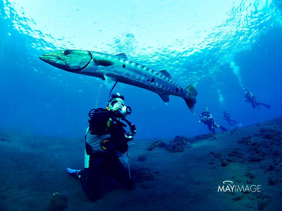 Bali Under water