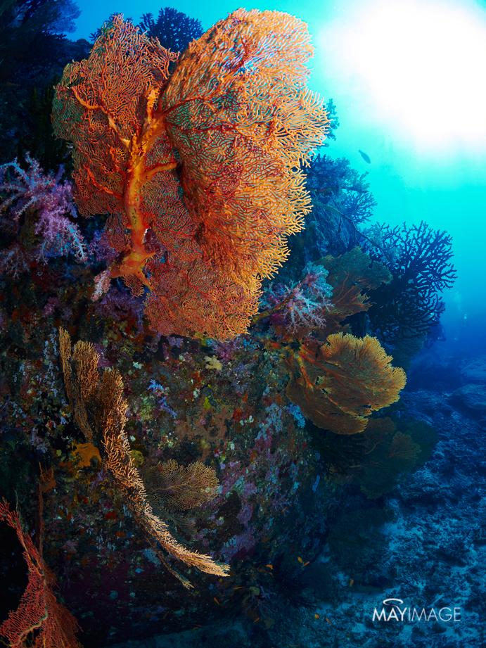 Similan Under Water
