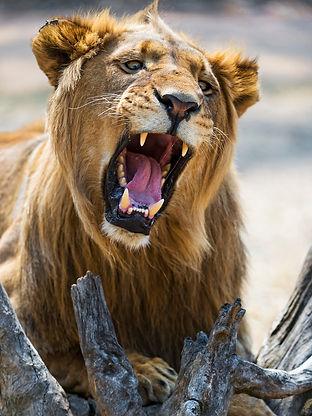 lion-mouth-Daniel7-1024.jpg