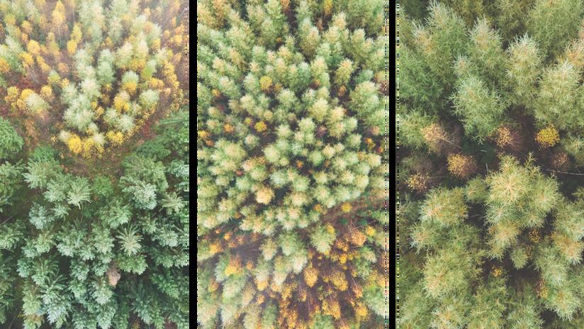 Pine_Mist_03_50%.png