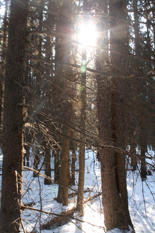 The Shadow of the Winter Season