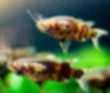 UD Catfish.jpg