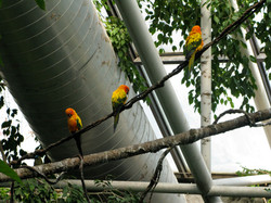 Macaws in the National Aquarium