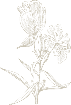evening primrose GOLD40%.png