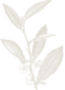 camellia GOLD 25%.png