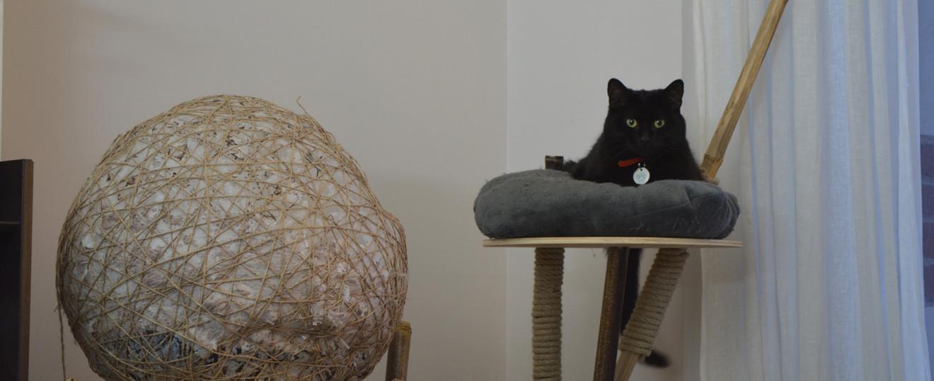 Arbre à chat eco-conçu