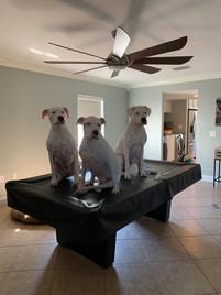Florida Dog Training
