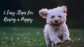 5 EASY STEPS FOR RAISING A PUPPY