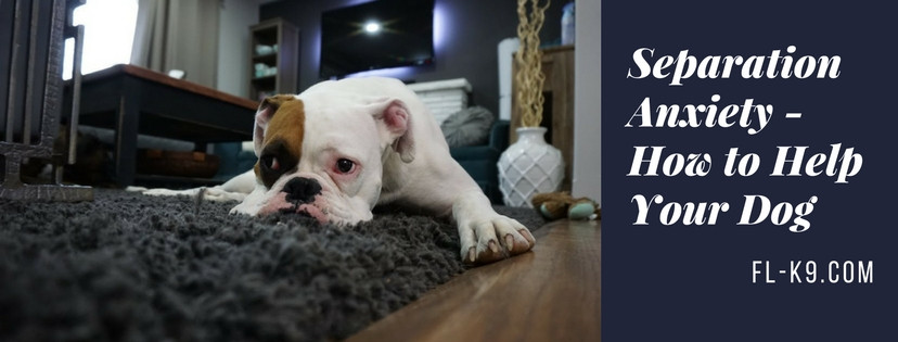 Separation Anxiety - How to Help Your Dog