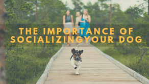 The Importance of Socializing your dog