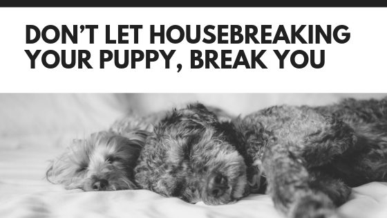 Don't Let Housebreaking Your Puppy, Break You