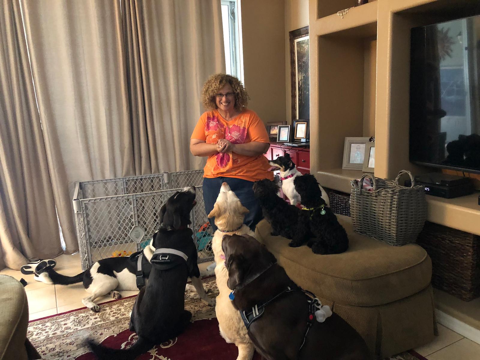 Dog Trainer Tampa Florida Dog Training