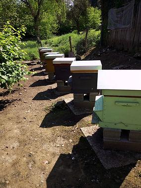 la ruche d'à coté