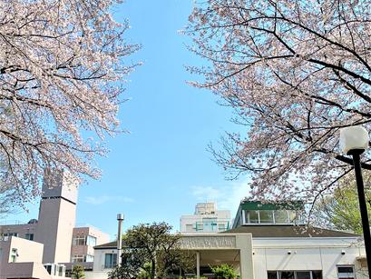 敬寿園の桜