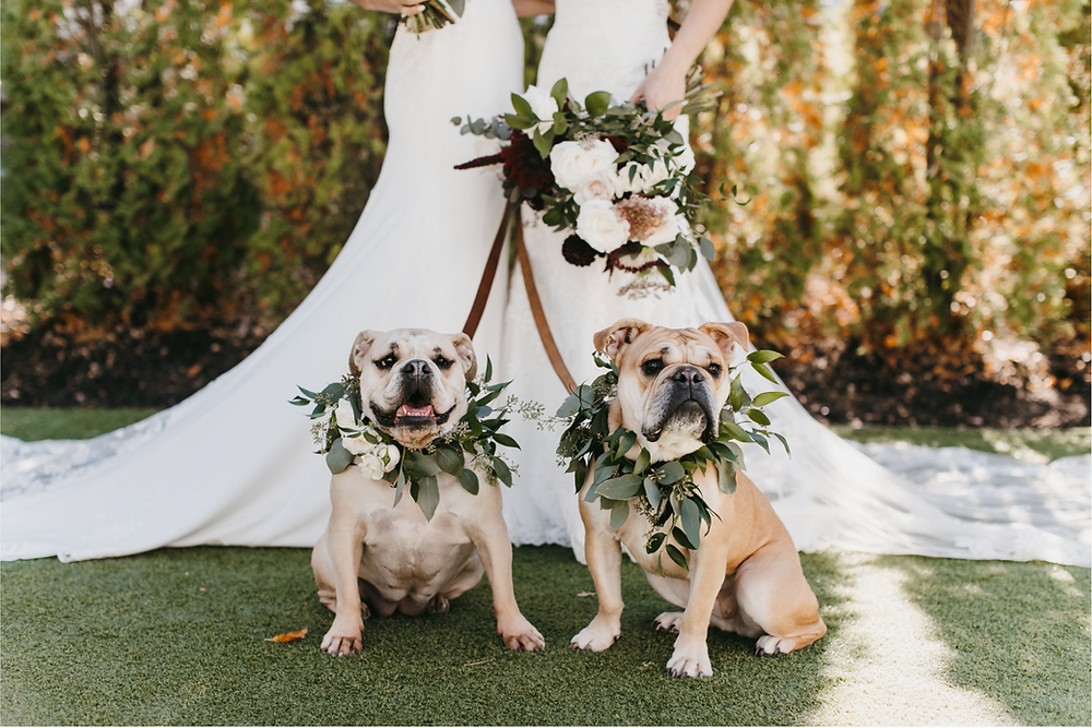 Hutton House, Lesbian Wedding, Gay Wedding, Bulldogs, Dogs at Wedding, Pets at Wedding, Mutt of Honor, Two Brides