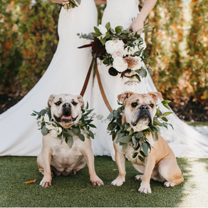 Are You A Pet Parent? Here's How to Include Your Fur Babies at Your Wedding...