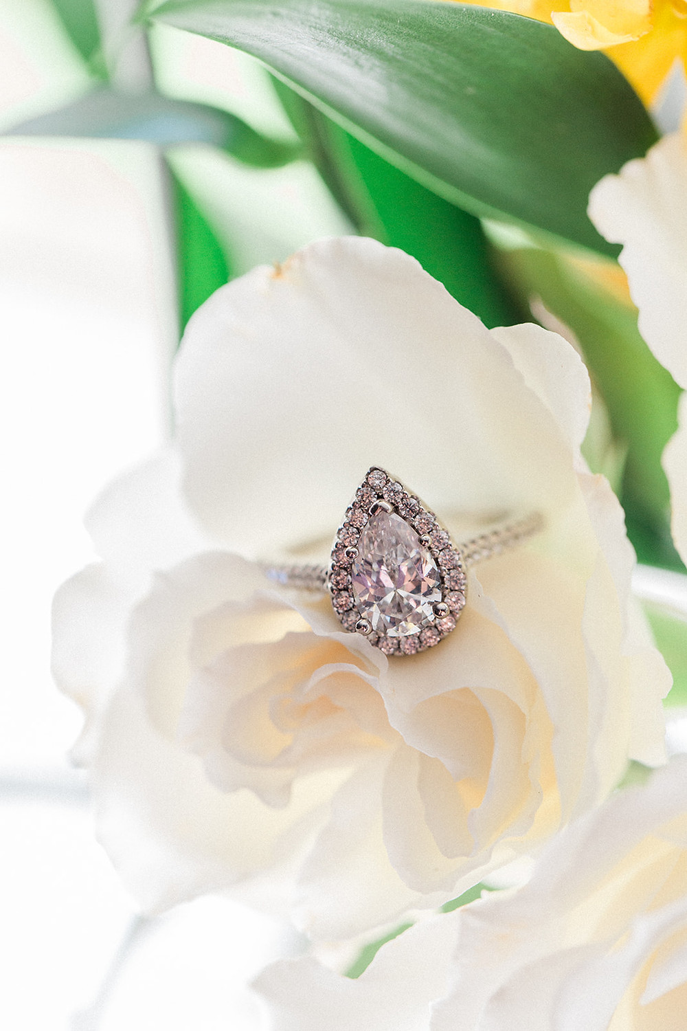 white rose, diamonds and roses, engagement ring, pear shaped diamond, halo mounting