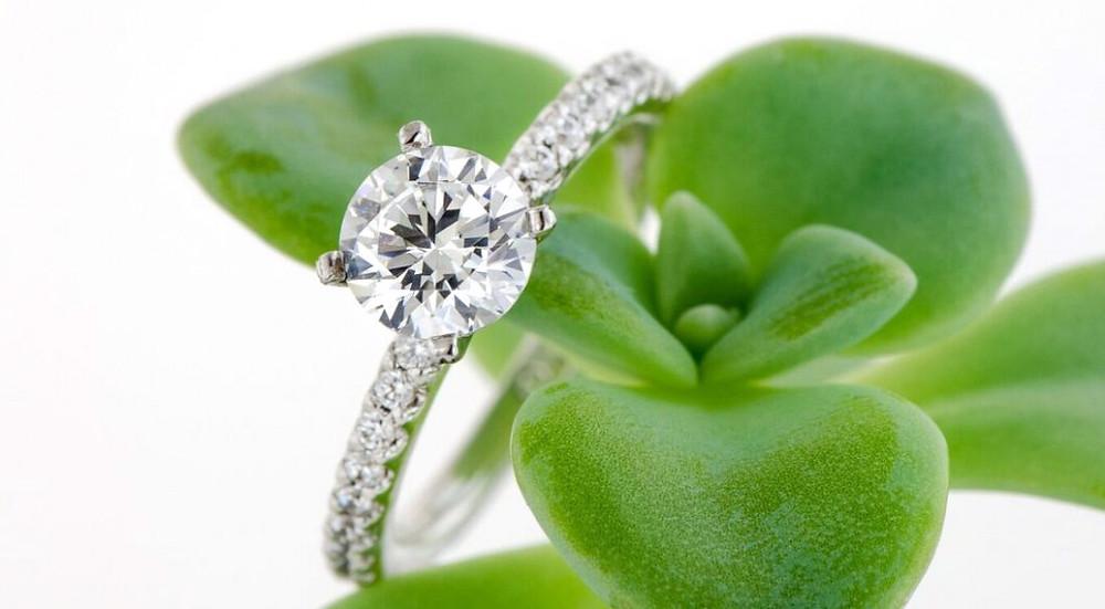 brilliant cut diamond, round brilliant diamond, engagement ring, diamond ring, succulent, diamonds and succulents