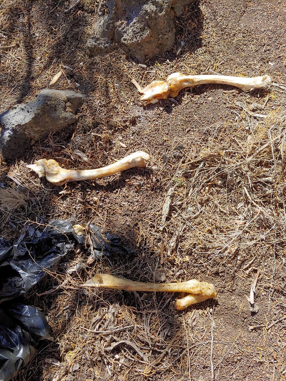 bones found in woods