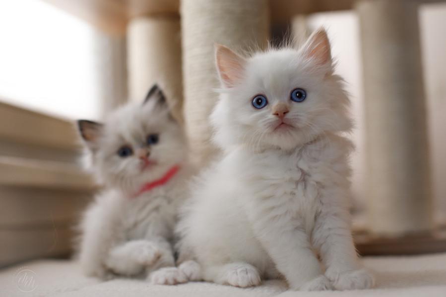 KittensMay2021-23.jpg