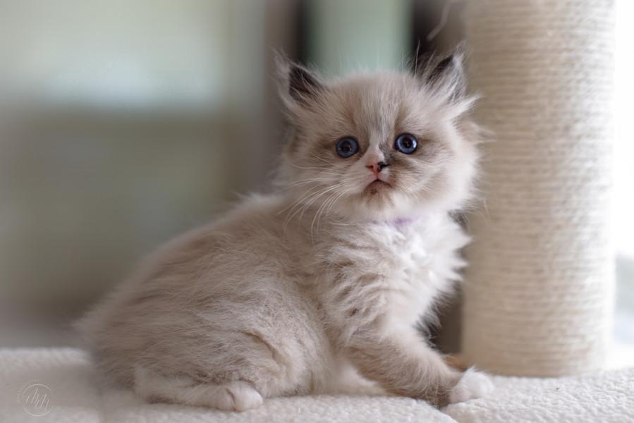 KittensMay2021-06.jpg
