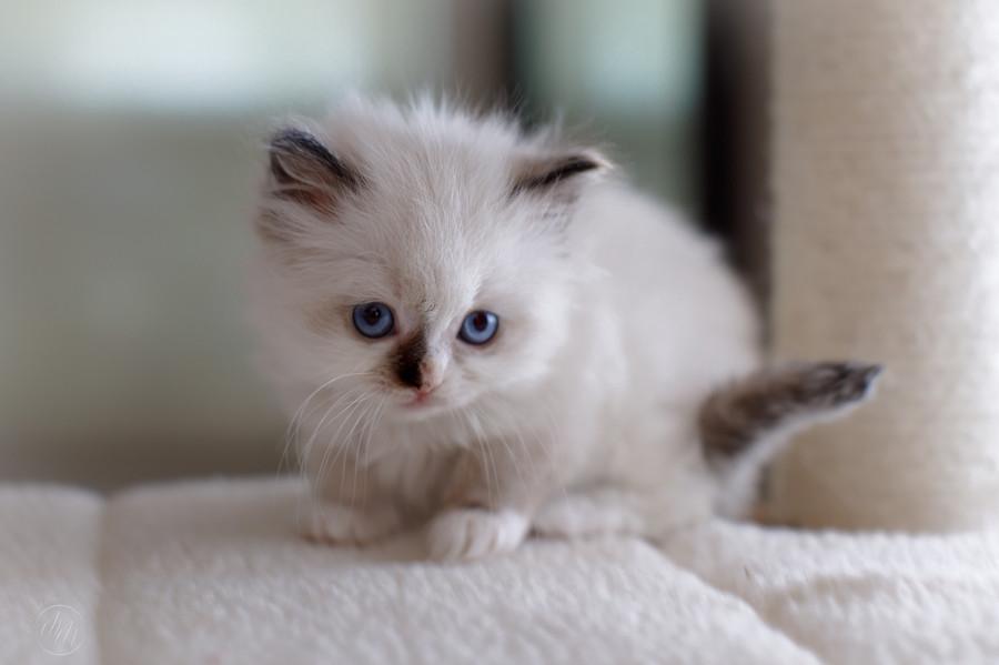 KittensMay2021-04.jpg