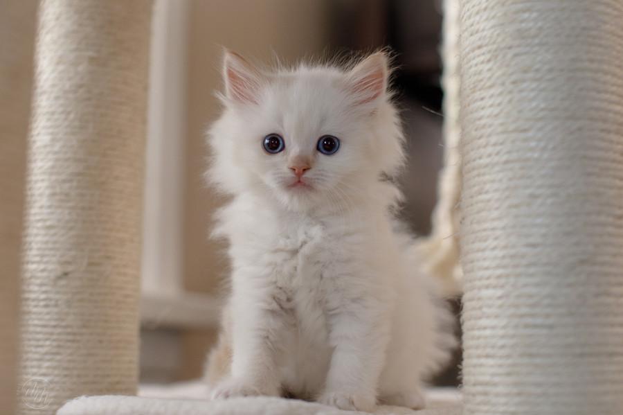 KittensMay2021-14.jpg