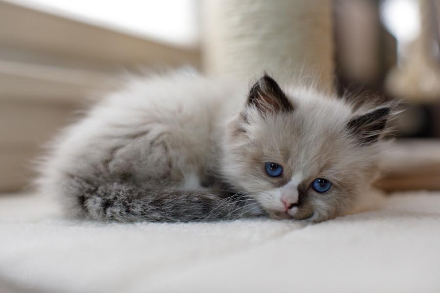 KittensMay2021-5.jpg