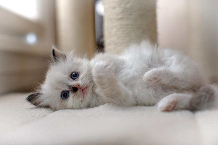 KittensMay2021-2_edited.jpg