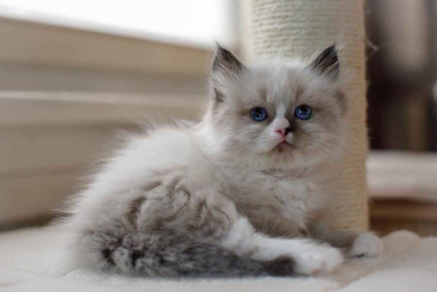 KittensMay2021-6.jpg