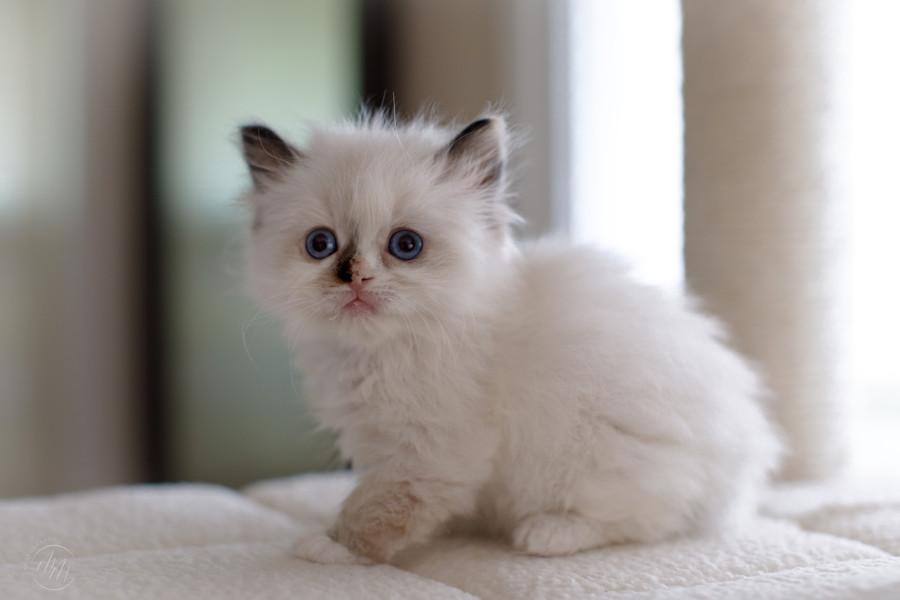 KittensMay2021-03.jpg