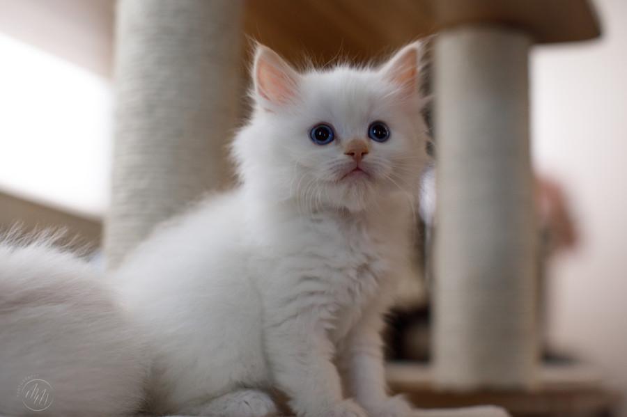 KittensMay2021-11.jpg