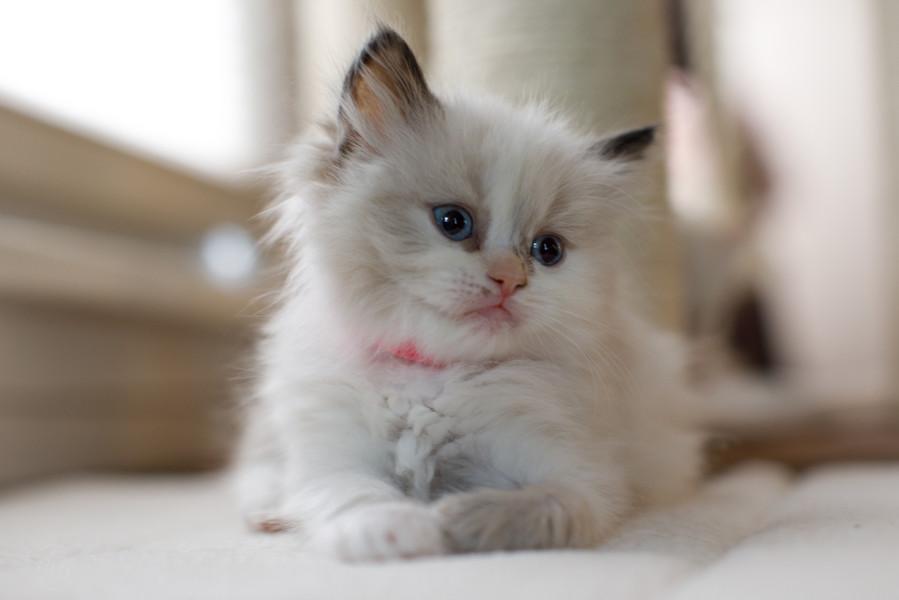 KittensMay2021-7.jpg