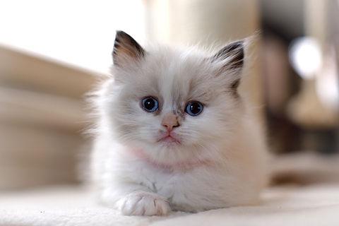 KittensMay2021-09_edited.jpg