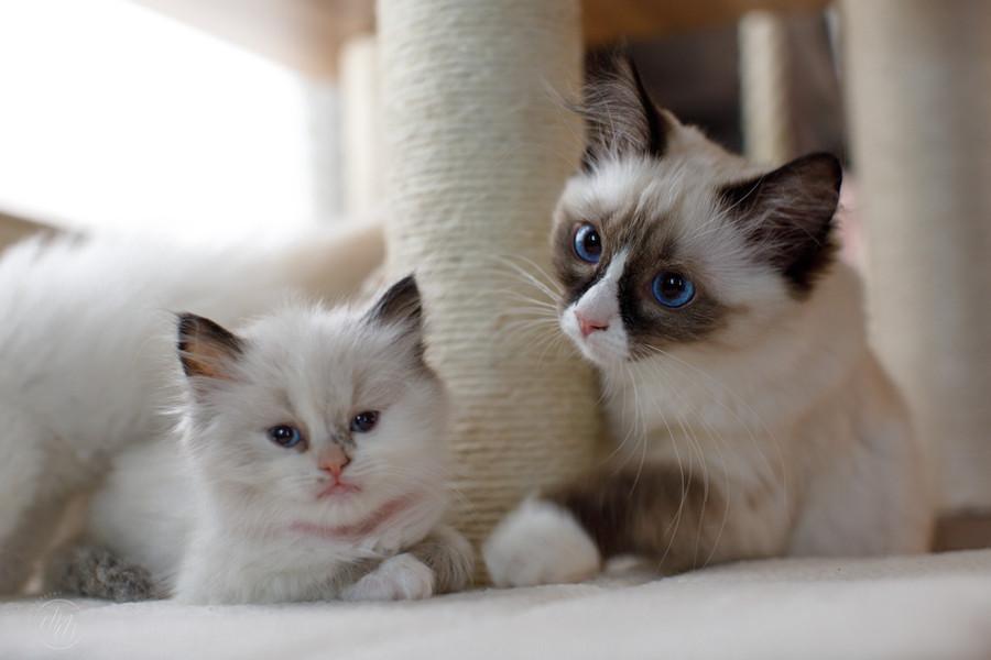 KittensMay2021-16.jpg