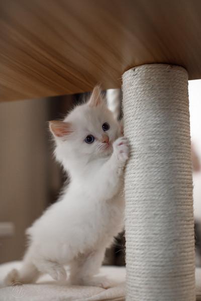 KittensMay2021-13.jpg