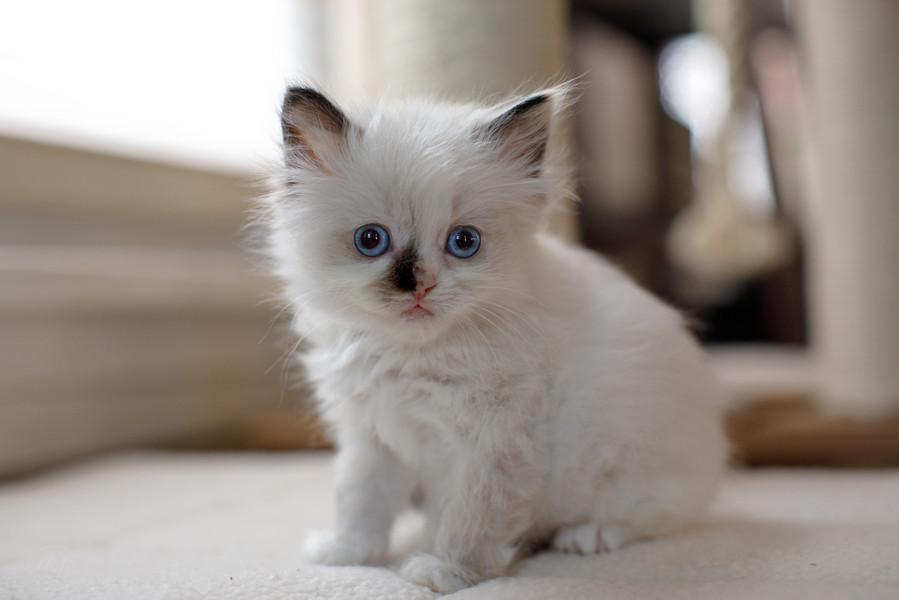 KittensMay2021-1.jpg