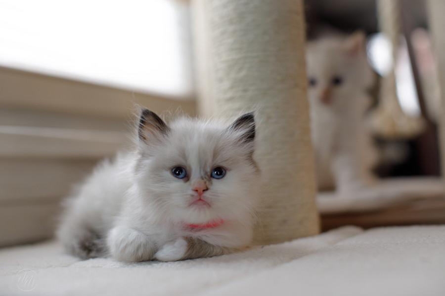 KittensMay2021-15.jpg