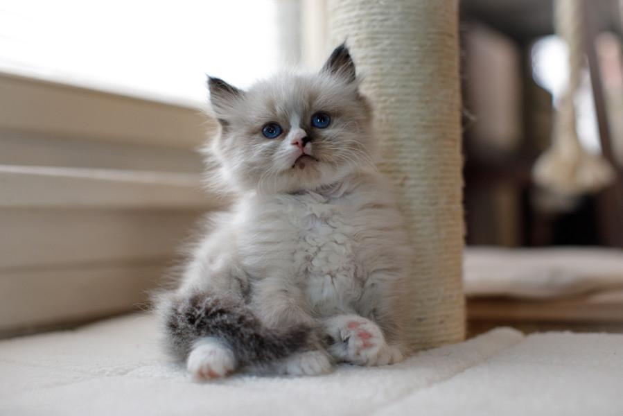 KittensMay2021-4.jpg