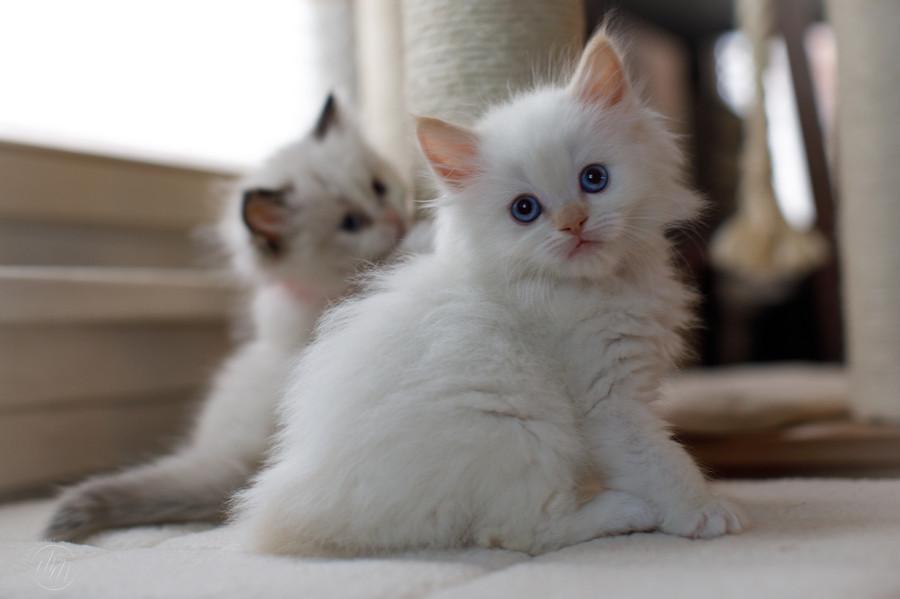 KittensMay2021-21.jpg