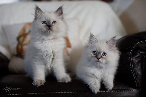 Kittens32521-63.jpg