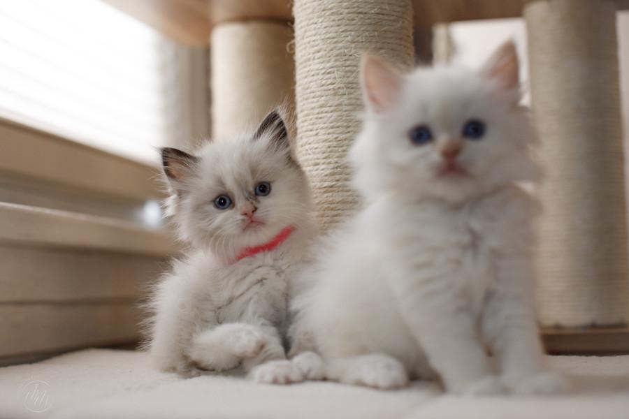 KittensMay2021-24.jpg