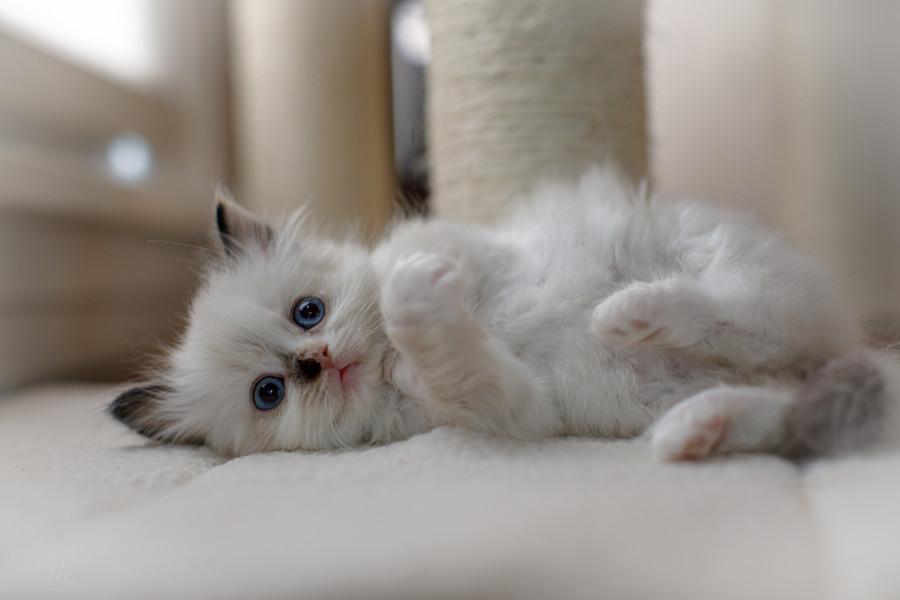 KittensMay2021-2.jpg
