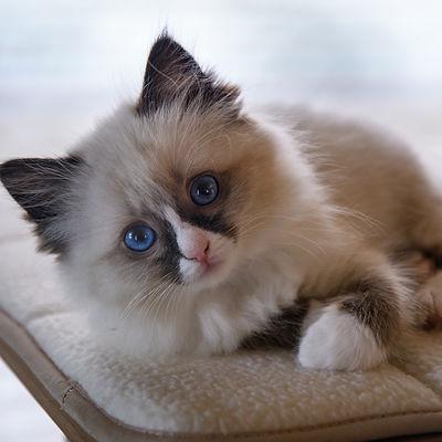 Kittens32521.jpg