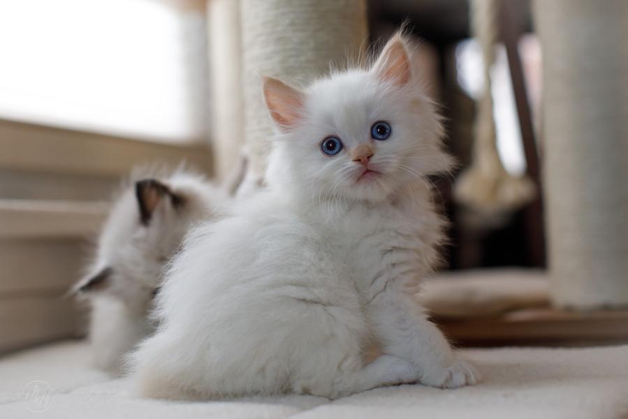 KittensMay2021-22.jpg