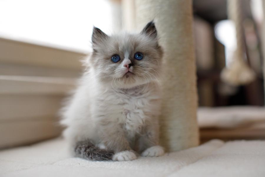 KittensMay2021-3.jpg