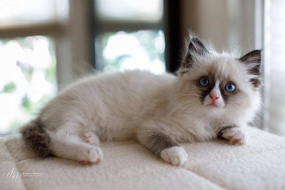 Kittens32521-79.jpg