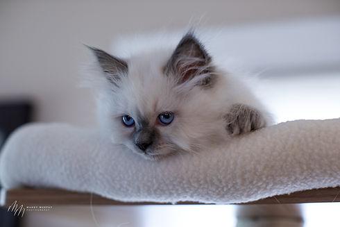 Kittens32521-109.jpg