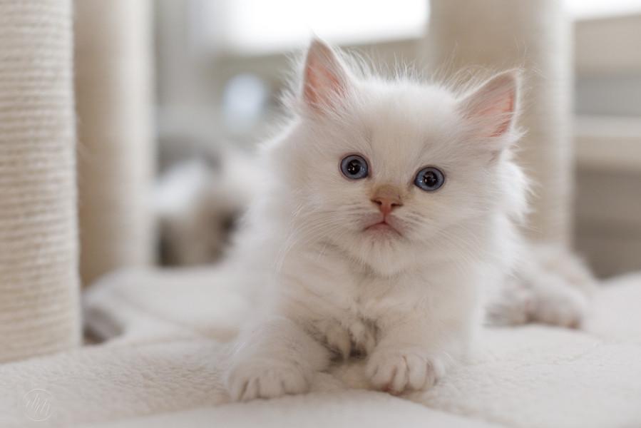 KittensMay2021-20.jpg